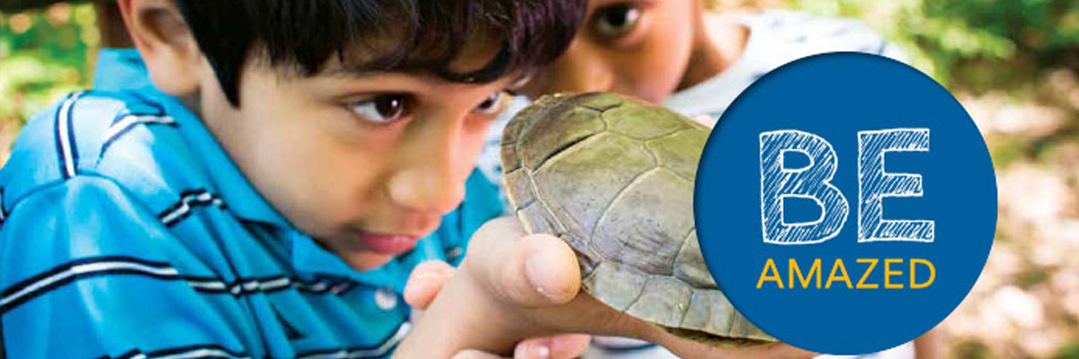 Rossman recruitment brochures BE AMAZED showing students looking closely at a turtle