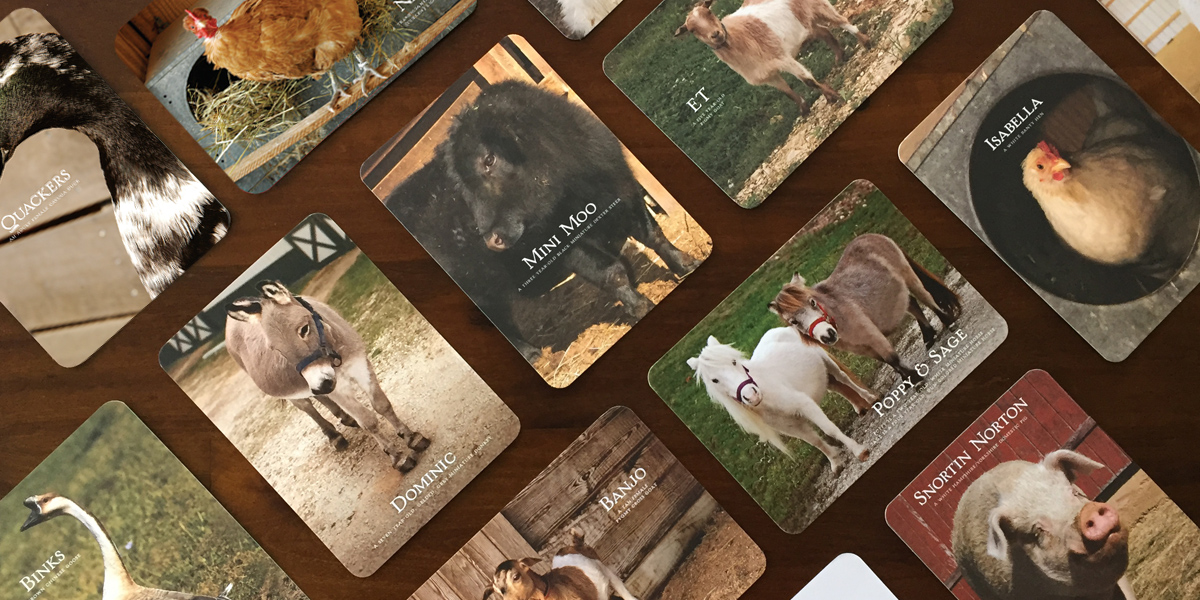 close up of Barn Buddy cards