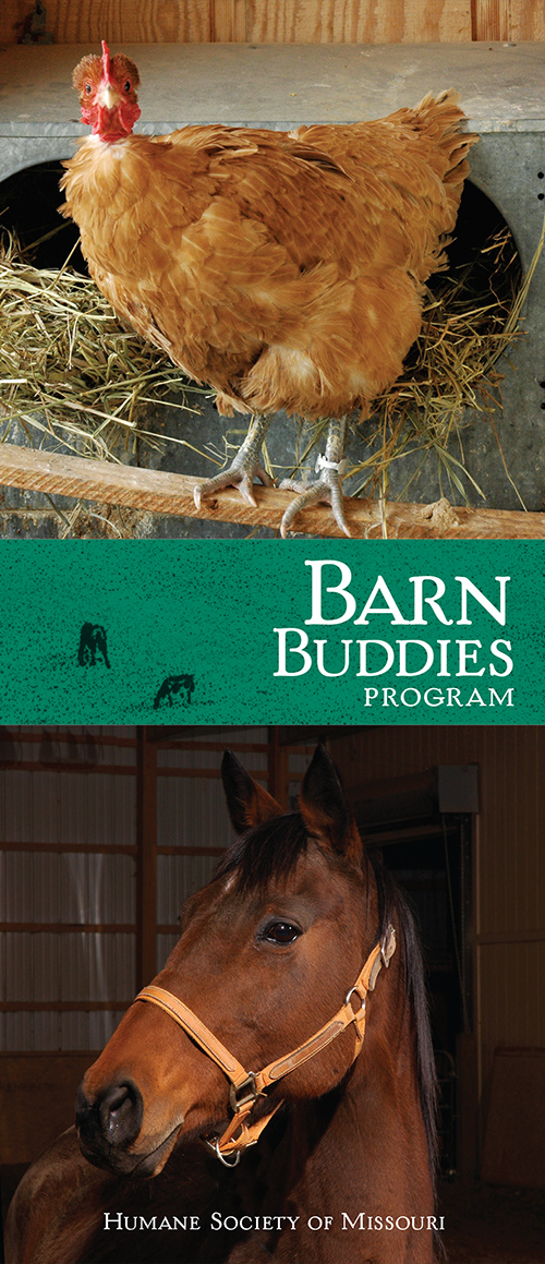 Barn Buddies program brochure