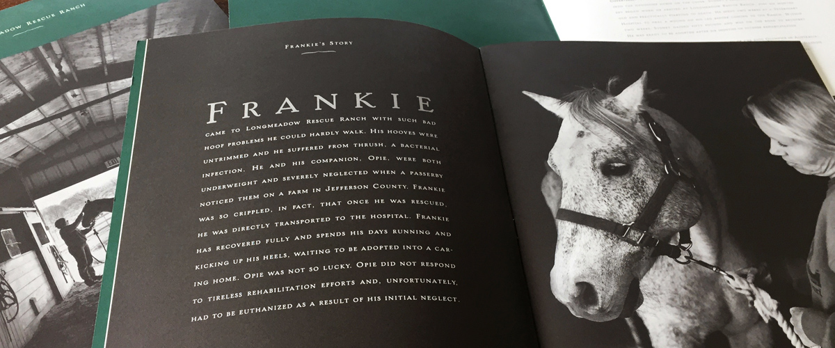 close up of Longmeadow Rescue Ranch capital campaign interior showing Frankie, a rescued horse