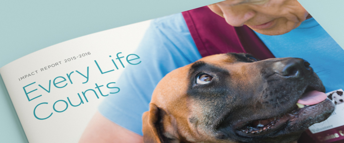 "cover of ""Every Life Counts"" Impact Report showing dog looking at owner"